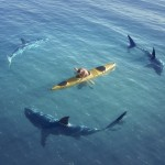 sharks circling canoe